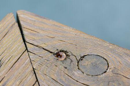 Screws screwdriver twist in wooden board. close up