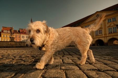 mischievous: Small mischievous dog