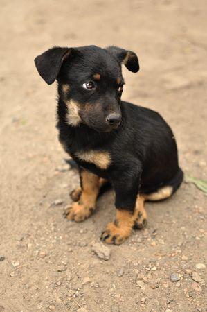 perro asustado: Abandonados, asustado perro negro joven, dej� solos en la calle.  Foto de archivo