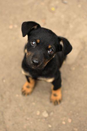 perro asustado: Abandonada, temerosa j�venes perro negro, abandonado en la calle. Foto de archivo