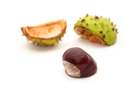 Horse-chestnut (latin - Aesculus hippocastanum), also known as Conker. photo