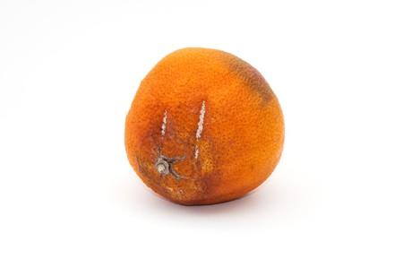 spoilage: Rotten orange, image is taken over a white background.
