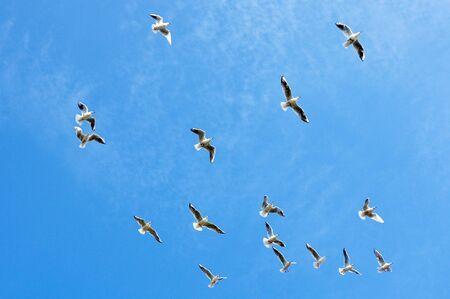 Seagulls flying against a blue sky photo