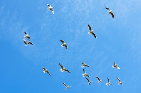 Seagulls flying against a blue sky photo