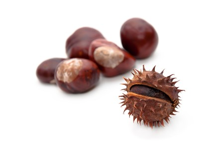 buckeye seed: Horse-chestnut (latin - Aesculus hippocastanum), also known as Conker.