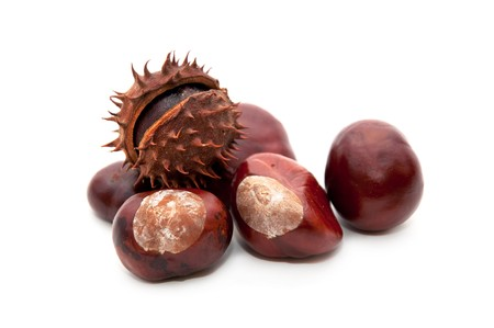 buckeye tree: Horse-chestnut (latin - Aesculus hippocastanum), also known as Conker.