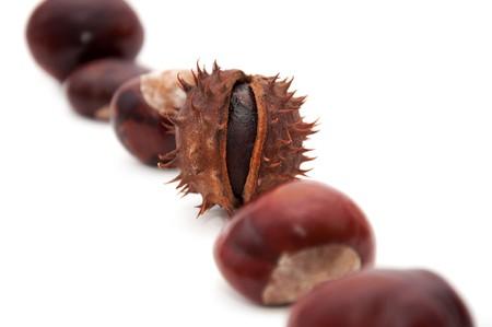 aesculus hippocastanum: Horse-chestnut (latin - Aesculus hippocastanum), also known as Conker.