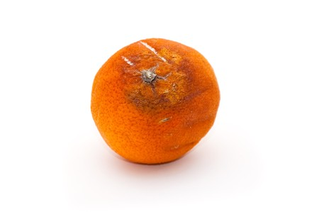 Rotten orange, image is taken over a white background. photo