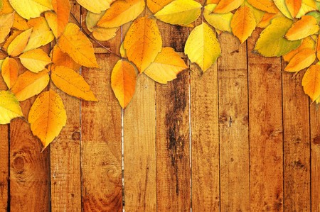 fall time: Yellow autumn leaves over a wooden texture background
