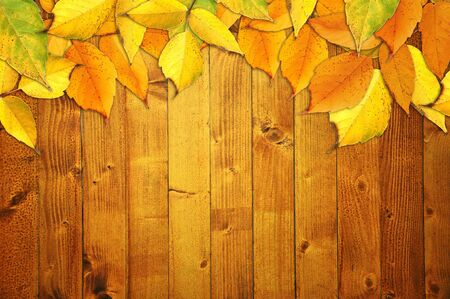 Yellow autumn leaves over a wooden texture background photo