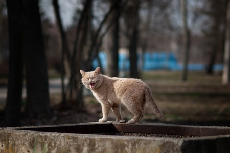Large stray cat at the street in natural surroundings. Stock Photo - 9204758