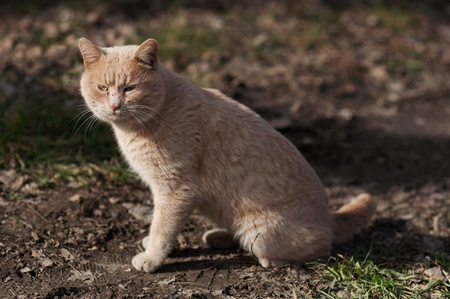 Large stray cat at the street in natural surroundings. Stock Photo - 9256894