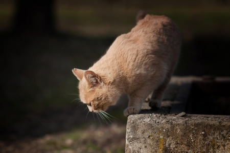 Large stray cat at the street in natural surroundings. Stock Photo - 9275342