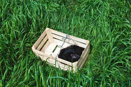perro asustado: Abandonado asustado enfermo joven perro negro, dejado solo en la hierba profunda Foto de archivo