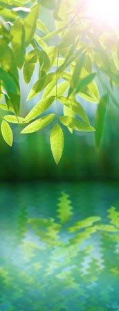 reflects: Fresh green leaves over water with reflection Stock Photo
