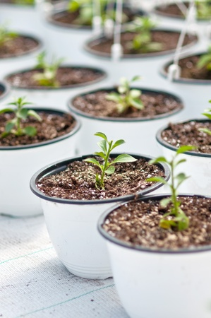 Small plants in plastic pots photo