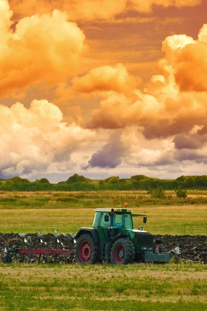 plough machine: Agriculture tractor in yellow field outdoors in summer with plough