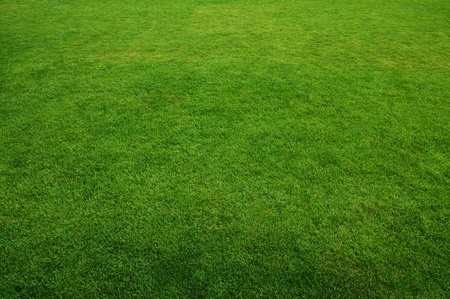 Green grass texture, background image photo