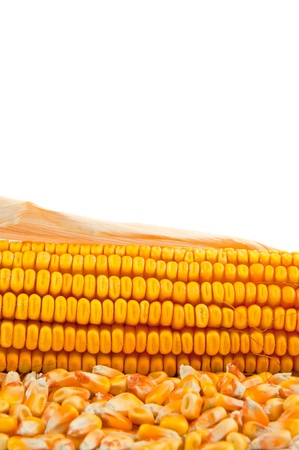 Beautiful yellow ear of corn over a white background photo