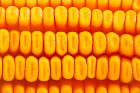 Beautiful yellow corn cob close up photo