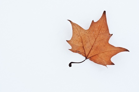 Brown autumn fallen leaf in a cold white snow photo