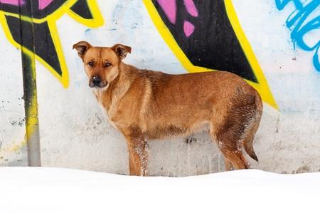 perro asustado: Solitaria perro amarillo asustado en la nieve fría Foto de archivo