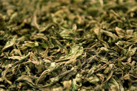 gunpowder tea: Dry pepermint prepared for tea, texture image