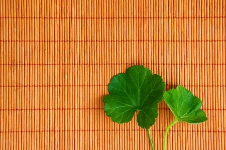Green leaf over an orange bamboo straw matt