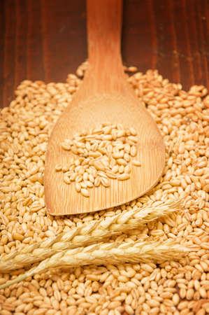Plenty of wheat grains on an old wooden kitchen table Stock Photo - 13668593