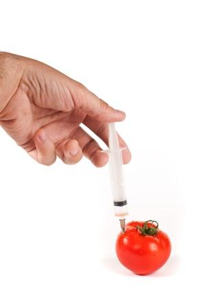 genetically modified: Iniezione per un pomodori geneticamente modificati