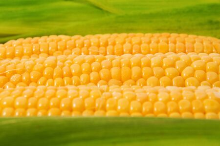 Fresh yellow sweet corn cob, healthy eating background image. photo