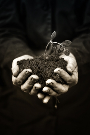 Agricultural worker holding a dead plant  in the soil. Ecology, environmental, nature preservation concept. Monochromatic image. photo