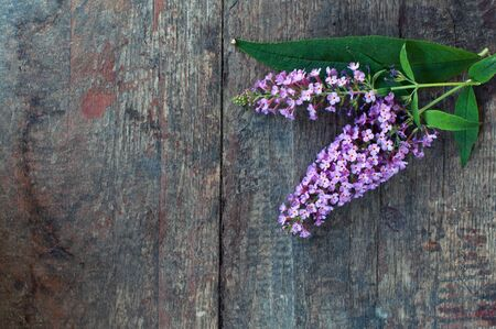 Beautiful lilac flower over a grungy wooden background photo