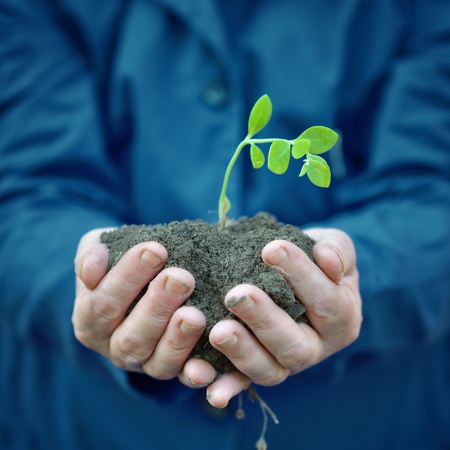 cupped hands: Agricultural worker holding a green young plant growing in the soil. Spring, growth, new life, ecology, environmental, nature preservation concept Stock Photo