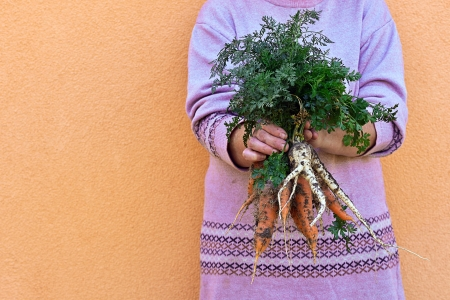 Vegetable feamle farmer holding a bunch of carrots in his hand photo
