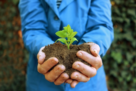 Agricultural worker holding a green young plant growing in the soil. Spring, growth, new life, ecology, environmental, nature preservation concept photo