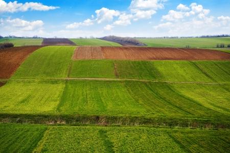 siembra: Campo agrícola. La tierra cultivable en la primavera, listo para la temporada de siembra.