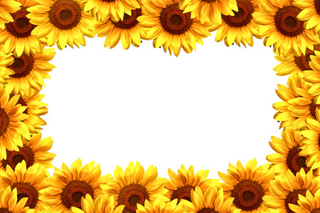 border frame: Beautiful sunflower border frame with copy space for text