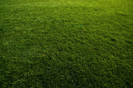 grassy field: Green turf at soccer field, grass as natural background.