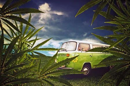 Hippie van and marijuana leaves in the fields
