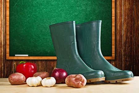 potato field: Rubber boots and various vegetable. Gardening concept - growing vegetables in home garden