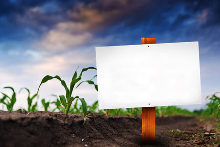 Blank sign in corn agricultural field in early spring, selective focus  Stock Photo