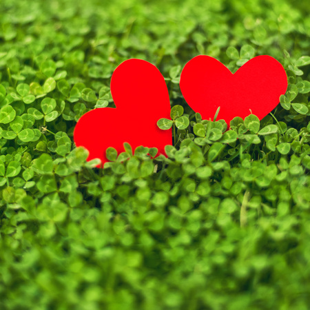 Red paper hearts in green clover. Saint Patricks day Conceptual image, celebrate spring season. photo