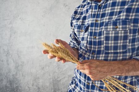 cultivo de trigo: Farmer masculina que sostiene la paja del trigo. Concepto de protección de los cultivos agrícolas. Foto de archivo