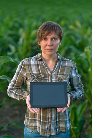 agronomist: Female agronomist with tablet computer in agricultural cultivated corn field. Stock Photo