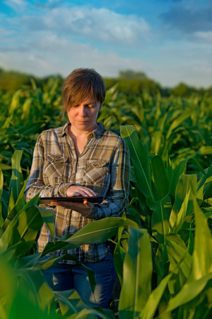 Female agronomist with tablet computer in agricultural cultivated corn field. Stock Photo