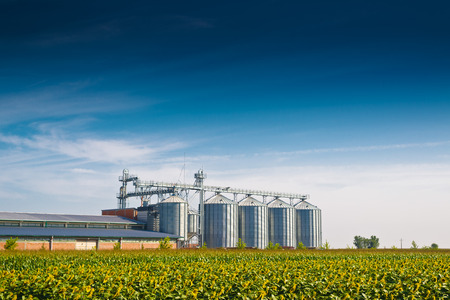 Grain Silos in Sunflower Field. Set of storage tanks cultivated agricultural crops processing plant. Stock Photo