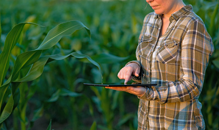 Female agronomist with tablet computer in agricultural cultivated corn field
