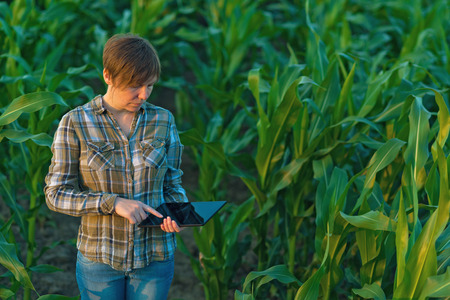 reclamation: Female agronomist with tablet computer in agricultural cultivated corn field