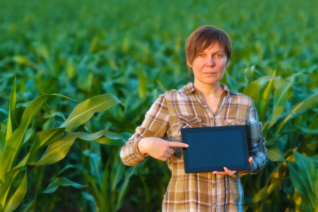 agronomist: Female agronomist with tablet computer in agricultural cultivated corn field